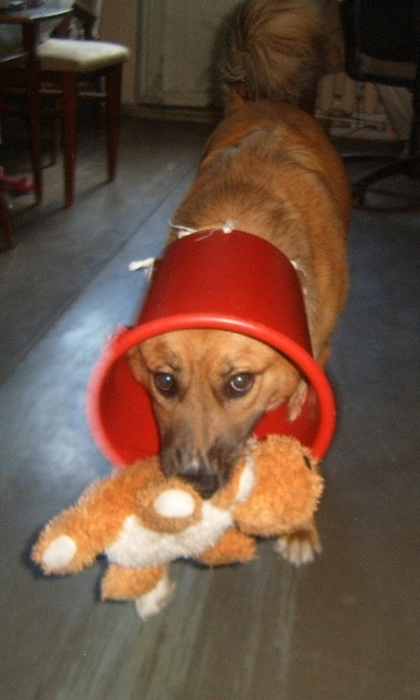 Воротник для собаки своими руками фото пошагово