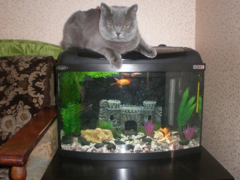 Дизайн аквариума 40 литров